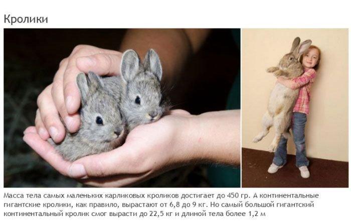 Самые большие и маленькие животные одного вида (19 фото)