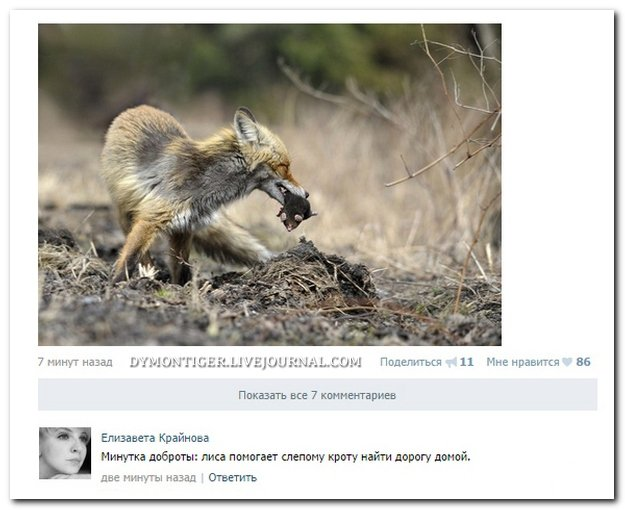 Скриншоты из социальных сетей. Часть 114 (26 фото)