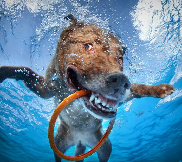 Собаки под водой (23 фото)