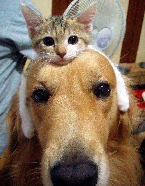Животные требуют внимания (24 фото)