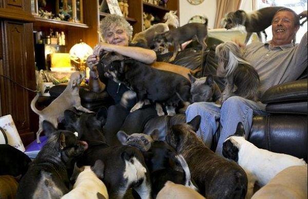 41 собака дома (4 фото)