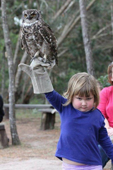 Отжабили девочку с совой (17 фото)