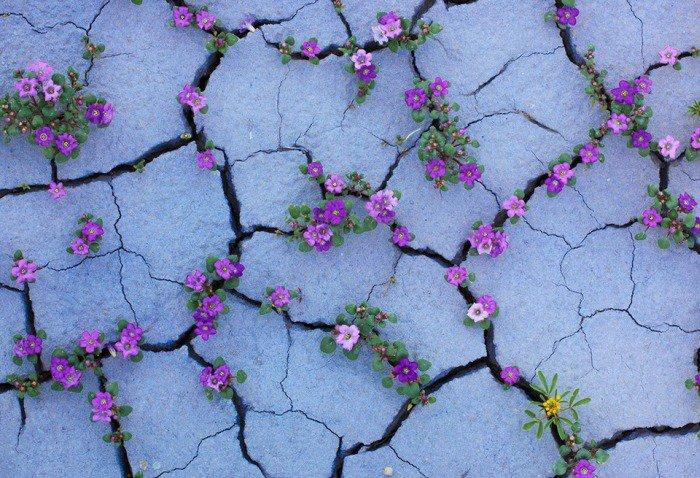 Когда пустыня превращается в рай (14 фото)