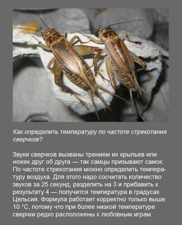 Интересные факты (19 фото)