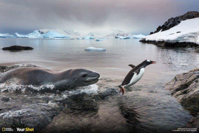 Лучшие фотографии 2015 года от National Geographic (40 фото)