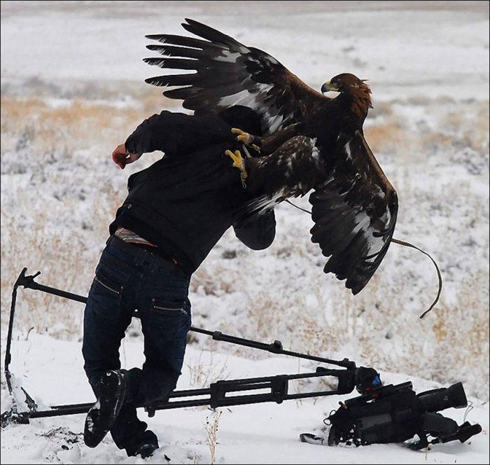 Сейчас вылетит птичка! (28 фото)