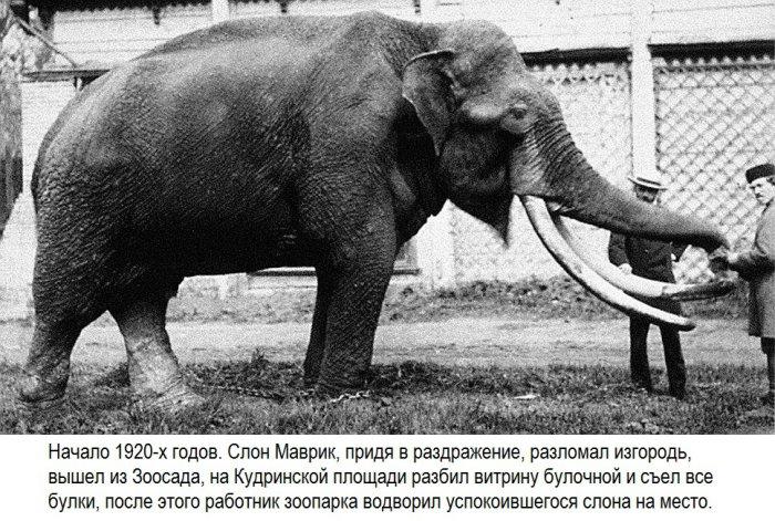 Побеги животных из Московского зоопарка (18 фото)