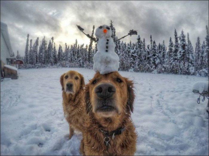 Зимнее настроение (18 фото)