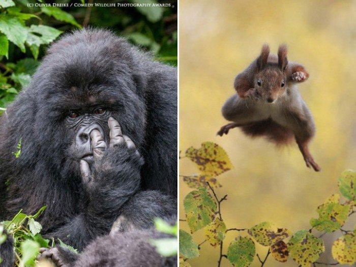 Забавные фотографии животных (19 фото)