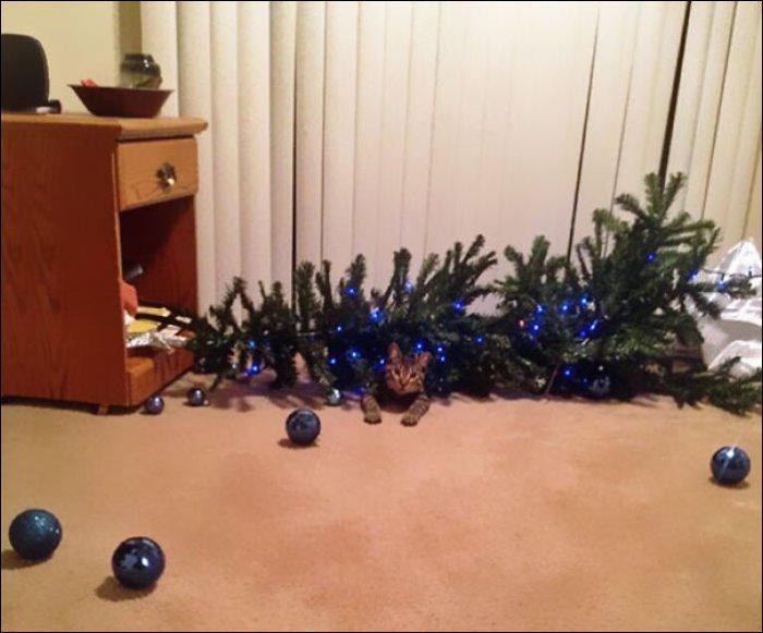 Коты и новогодние елки (14 фото)