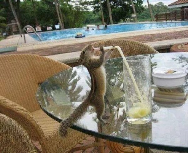 Маленькие пьянчужки (32 фото)