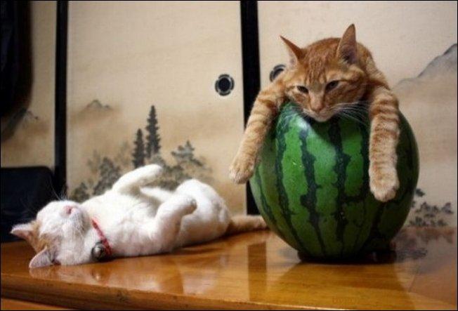 Коты забавно спят (23 фото)