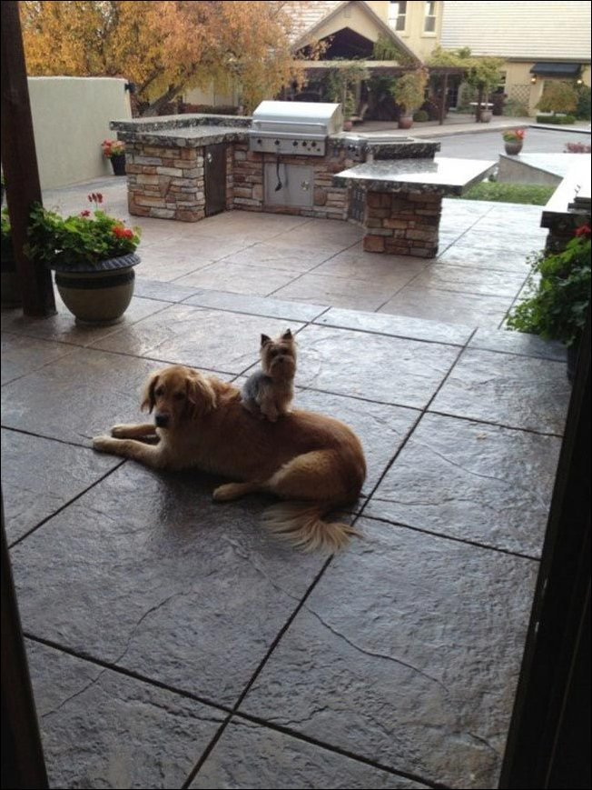 Собаки отдыхают где попало (32 фото)