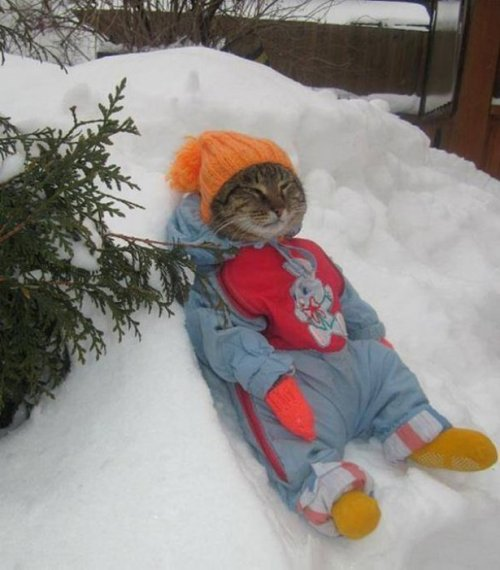 Приколы с котами (31 фото)