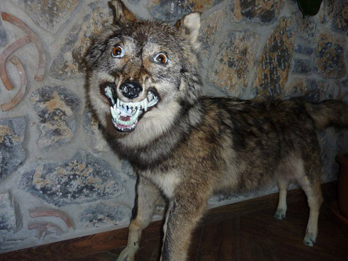 Нелепые и смешные чучела животных (23 фото)