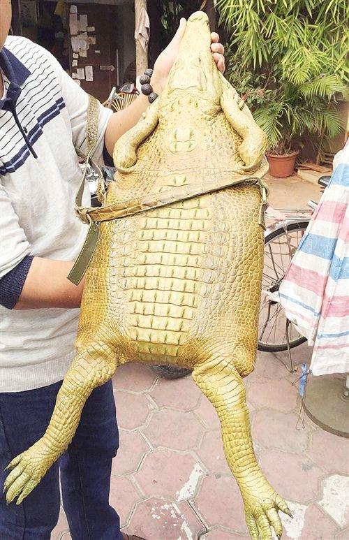 Сумочка из крокодила (2 фото)
