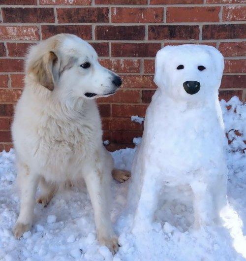 Снеговики в видео домашних животных (11 фото)