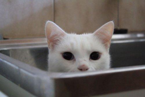 Неправильные коты (37 фото)