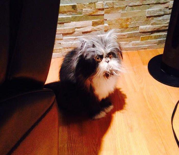 Невероятно мудрый кот (20 фото)