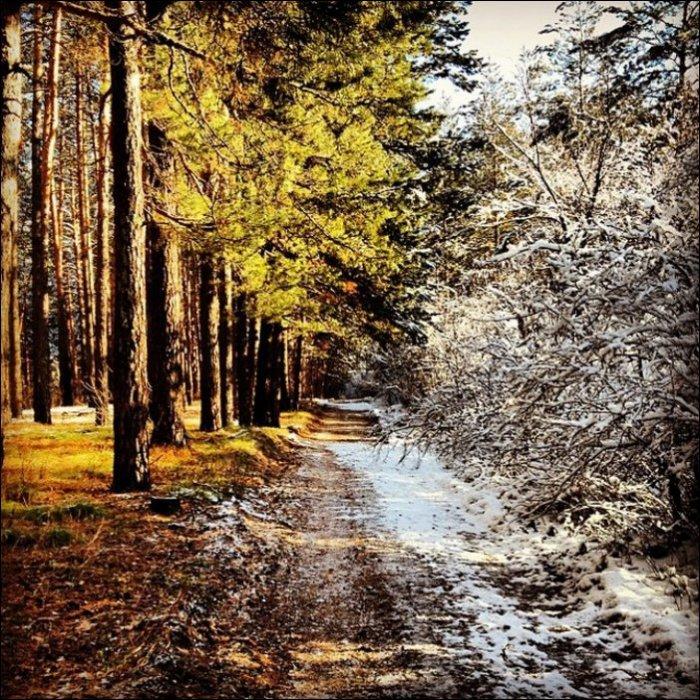 Солнце против снега (8 фото)