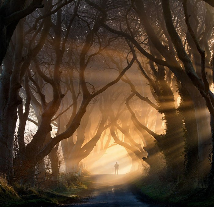 Невероятные деревья (19 фото)