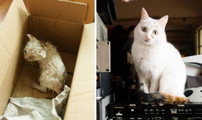 Коты. До и после (30 фото)