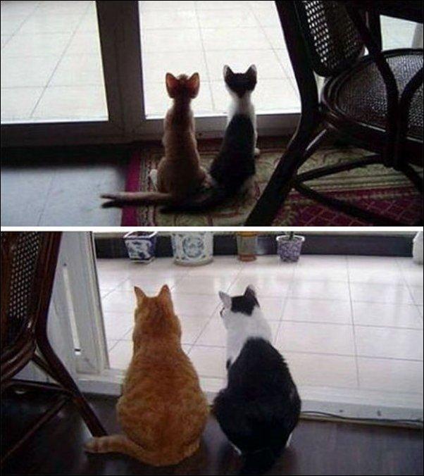 Коты раньше и сейчас (14 фото)