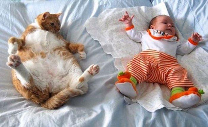 Дети и коты (21 фото)