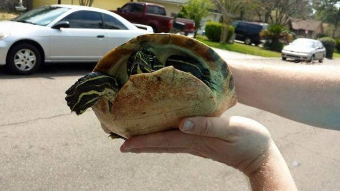 Автомобиль против черепахи (6 фото)
