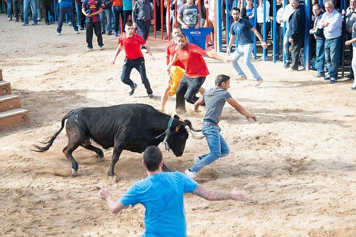 Не стоит дразнить быка (5 фото)