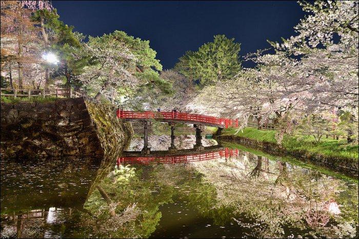 Цветение сакуры в Аомори (16 фото)