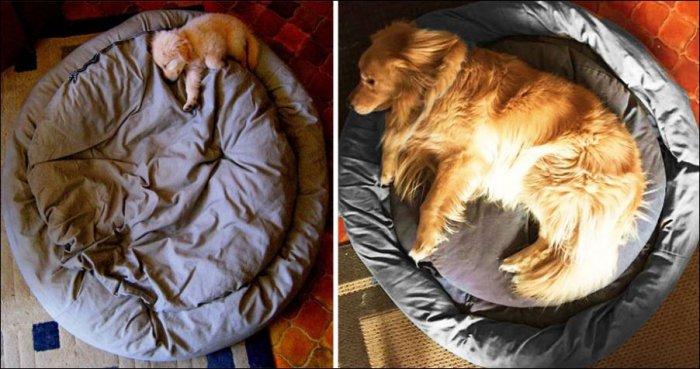 Собаки выросли (15 фото)
