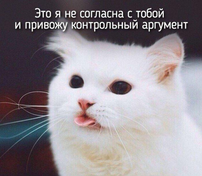 Животные, которые похожи на людей (20 фото)