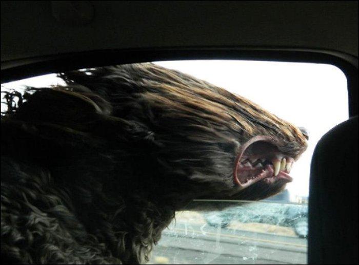 Песики против ветра (14 фото)
