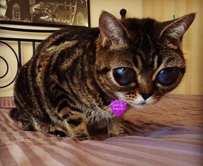 Кошка-инопланетянин (6 фото)