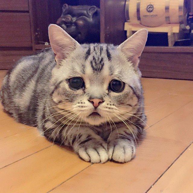 Очень грустный котэ (14 фото)