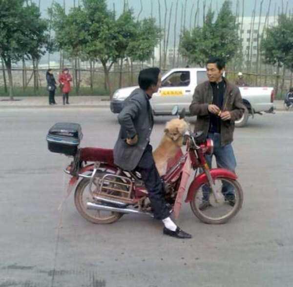 Только в Азии (49 фото)
