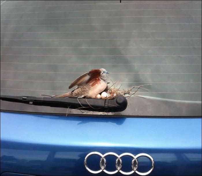 Неожиданные места гнездования (16 фото)