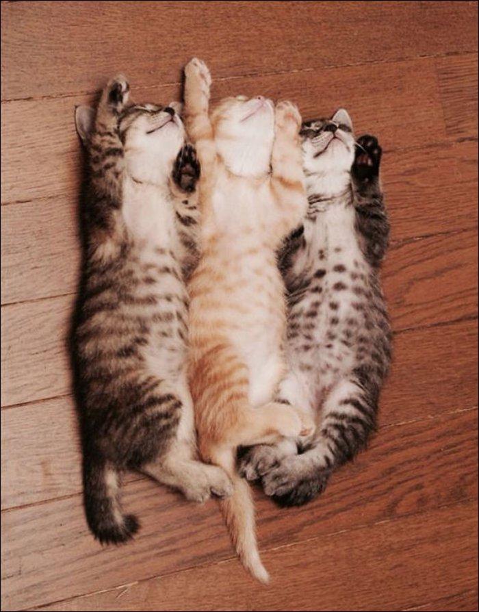 Котята спят (21 фото)