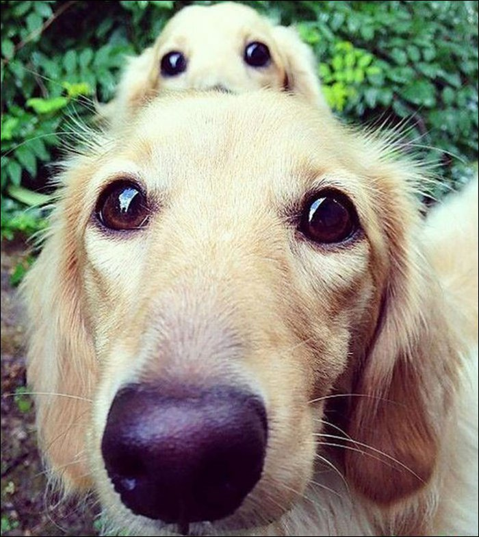 Собаки со щенками (15 фото)