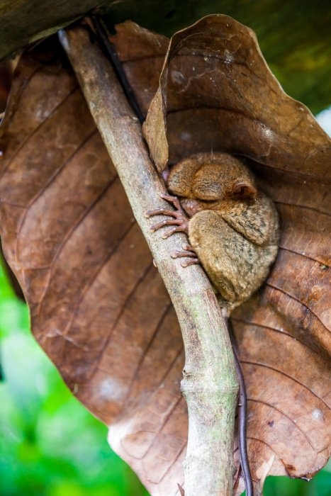 Няшные долгопяты (31 фото)