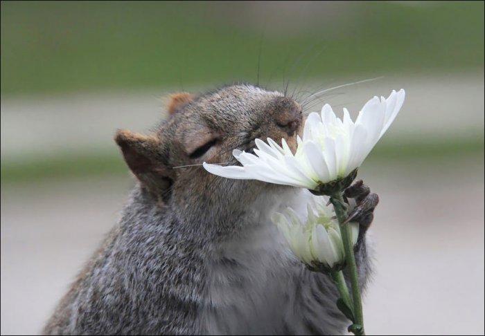 Зверушки нюхают цветы (25 фото)