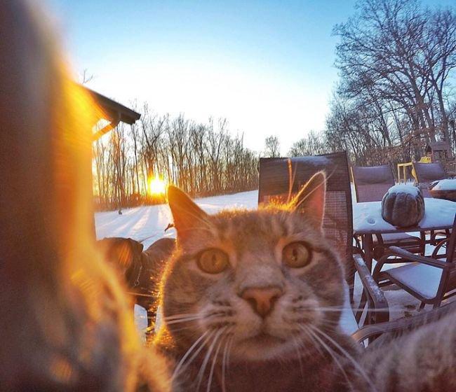 Селфи-кот (8 фото)