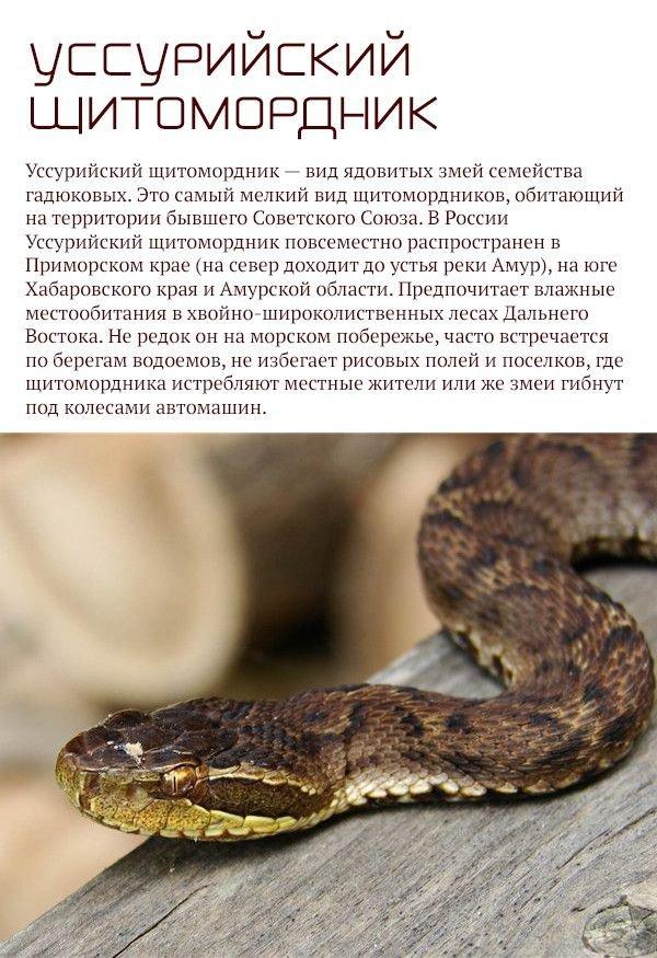 Самые опасные животные, обитающие на территории России (17 фото)