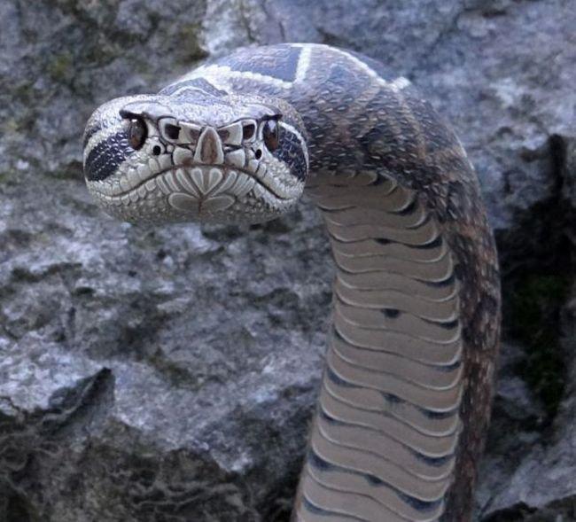 Классная трость в виде змеи (9 фото)