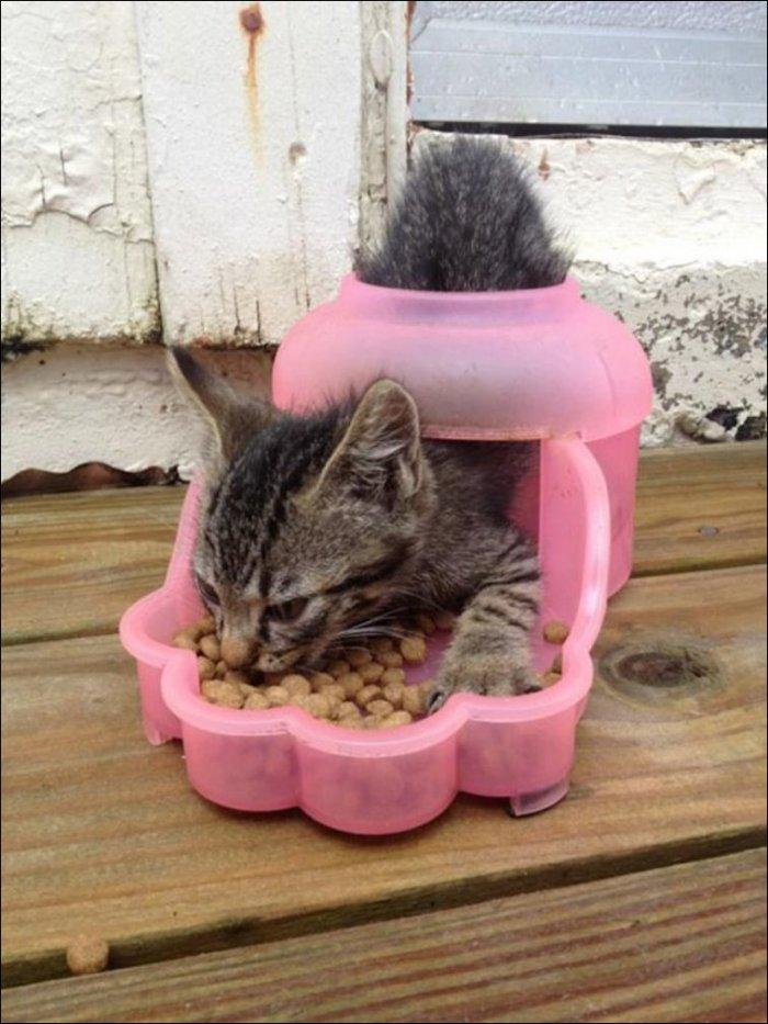 Странная кошачья логика (13 фото)
