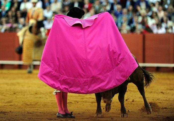 Когда бык победил (4 фото)