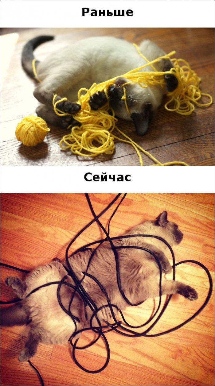Жизнь котов изменилась (15 фото)