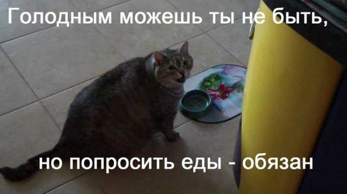 Загонные котики (25 фото)