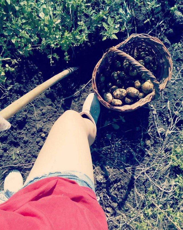 Копать картофель прикольные картинки, кардамона картинки праздником